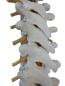 spine0316