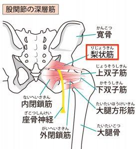 深層筋の図解